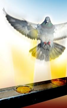 How birds see the UV light