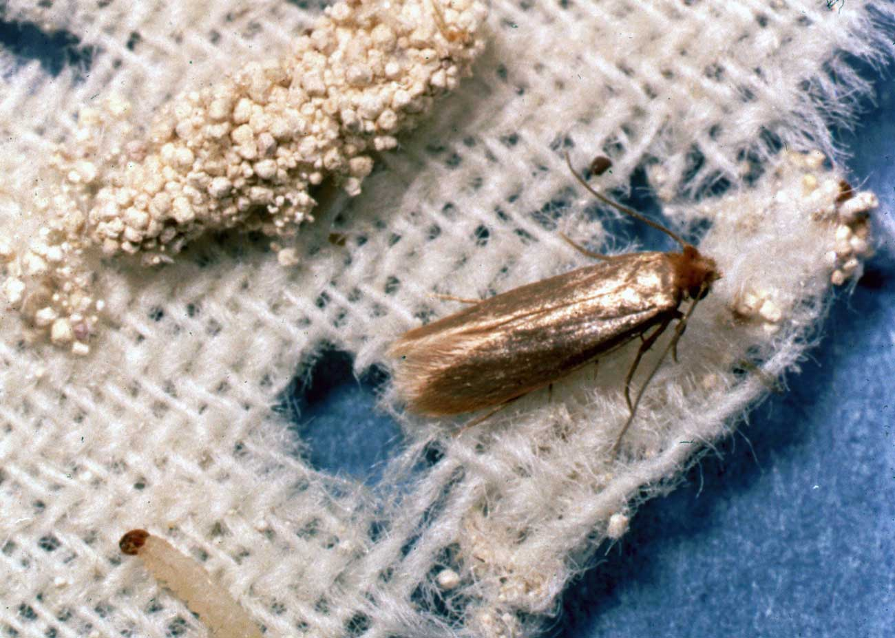 Textile Pests Enviroguard Pest Control