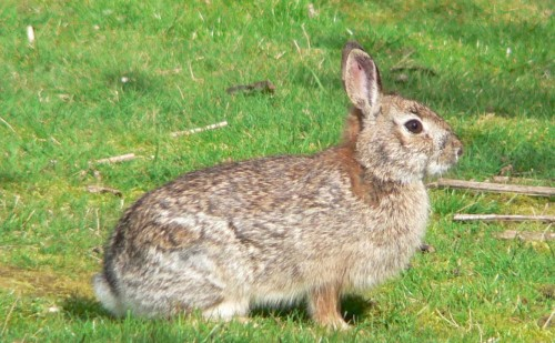 Rabbit Control & Prevention