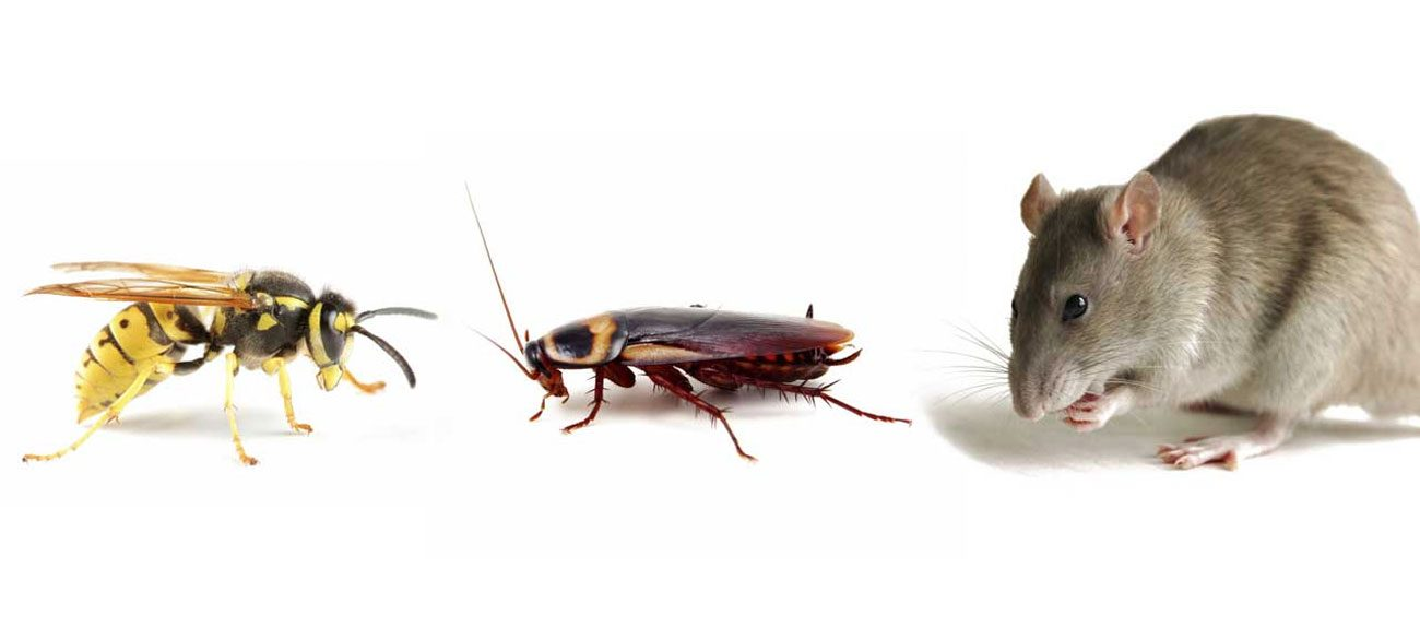 Enviroguard offer a large range of pest control services. -